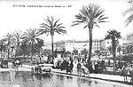 Palmiers de l'avenue Masséna
