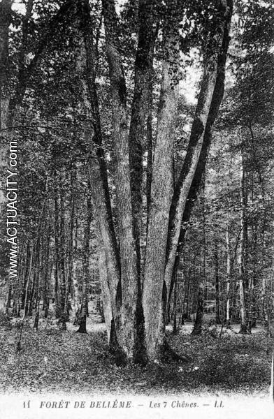 Forêt de Bellême Les 7 chênes