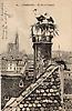 Strasbourg, cathédrale et nid de cigognes