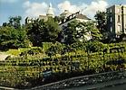 La vigne de la butte Montmartre